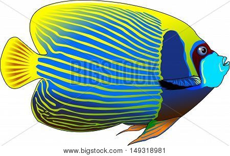 the figure shows the fish angelfish vector