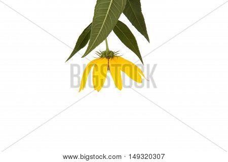 Yellow Wildflower