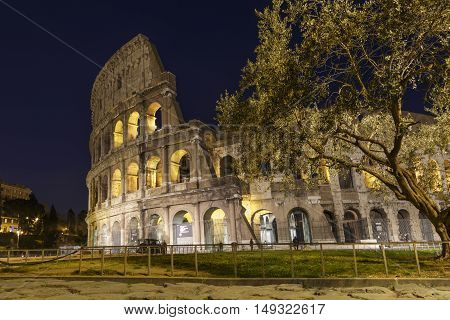 Colosseum at night with olive tree, Rome, Italy