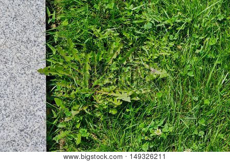Green grass and non-polished granite slab urban city background