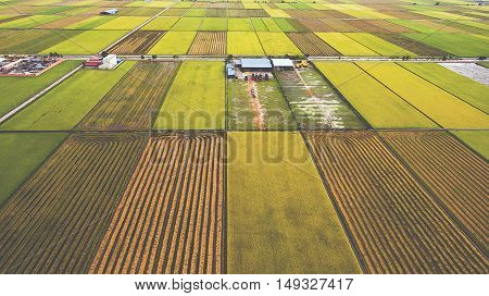 Aerial photo from flying drone of farm buildings in countryside near green fields with sown land with grain. Asian rural near land with grown organic rice plants for healthy eating