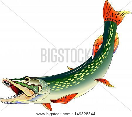 huge toothy pike attacks illustration on a white background vector
