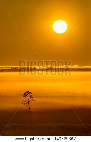 Colorful sunrise and mist in autumnal landscape
