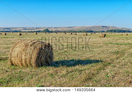 Straw bales on farmland at sunset. Haystacks lay on yellow field in golden light of setting sun. Blue sky, green small trees and chulk hills on background. Beautiful landscape lit by sun. Volgograd region in Russia