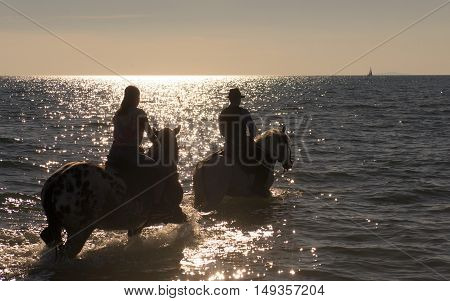 horse ridins walking in the sea in evening