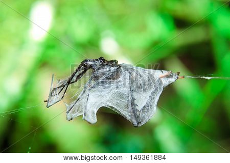 Insect trapped in spider web green natural background
