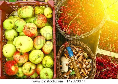 autumn harvesting - viburnum berries, mushrooms, apples in baskets close up photo on the ground
