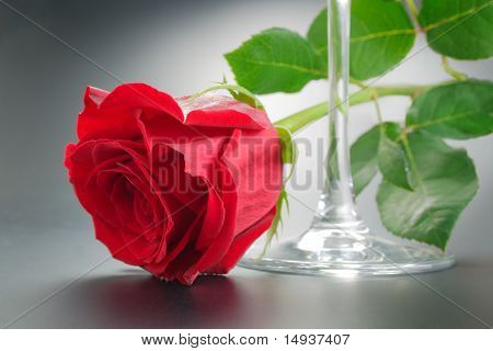 Red Rose And Wineglass