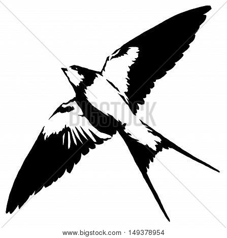 black and white paint draw swallow illustration