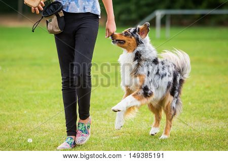 Girl With Dog On A Dog Training Field