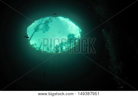 An entrance to Calavera cave, Yucatan peninsular, Mexico