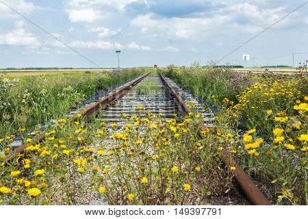 horizontal image of old railroad tracks no longer in use with a rail car sitting on it in the distance and yellow flowers growing across it in the forefront on a beautiful summer day