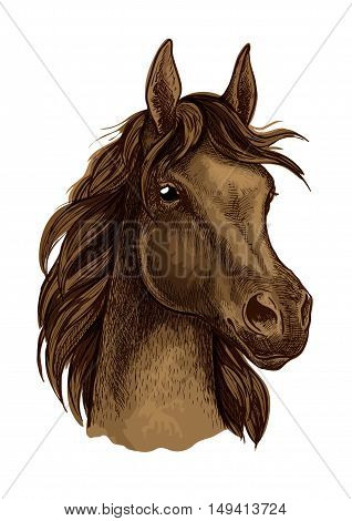 Brown horse artistic portrait. Beautiful mustang with long mane waving in wind and looking aside