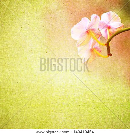 Textured Old Paper Background With Flower