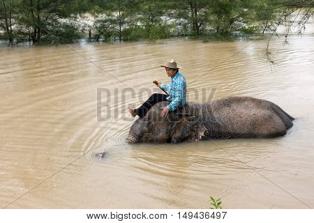 Khau Lak Thailand- september 16 2016: A mahout washes his elephant in the river.