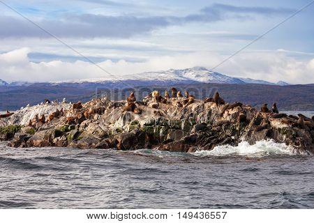 Seal Island Near Ushuaia