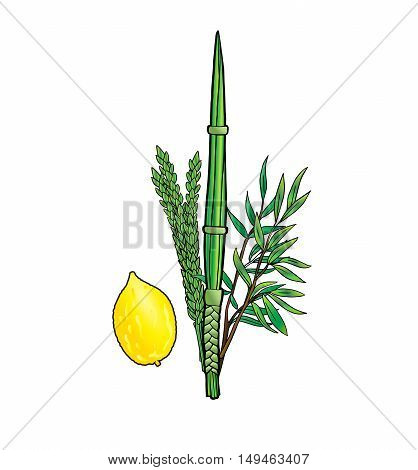 Jewish traditional four species for Jewish Holiday Sukkot. Vector illustration. Happy Sukkot background. Jewish traditional four species lulav, etrog for Jewish Sukkot festival.