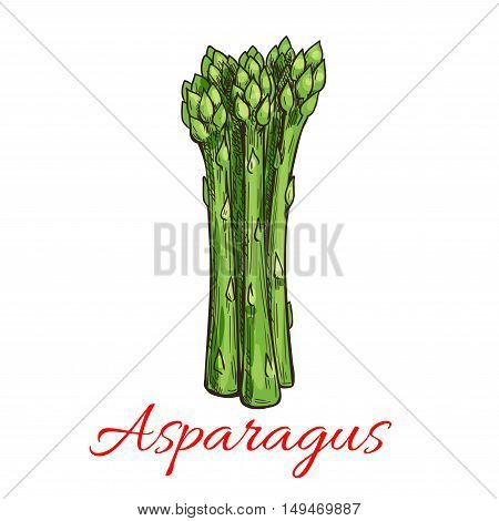 Asparagus vegetable plant icon. Bunch of asparagus stems. Fresh food product element for sticker, grocery shop, farm store element
