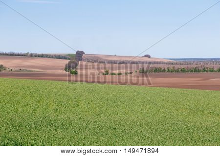 Rural summer countryside landscape. Green field with blue sky.