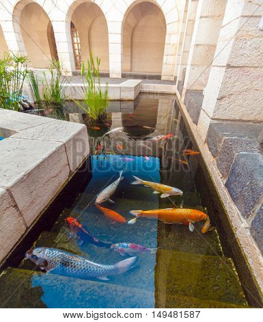 Koi Pond with Japan Colorful Carps in water