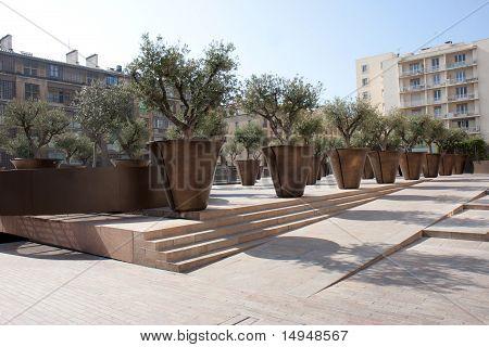 Olive trees of the square Villeneuve Bargemon