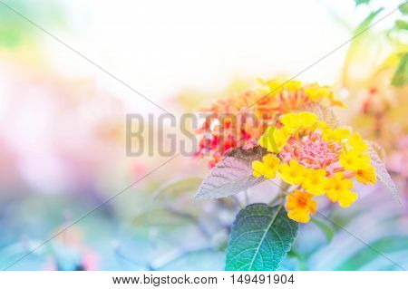 abstract flower colorful bacground light abstract flower