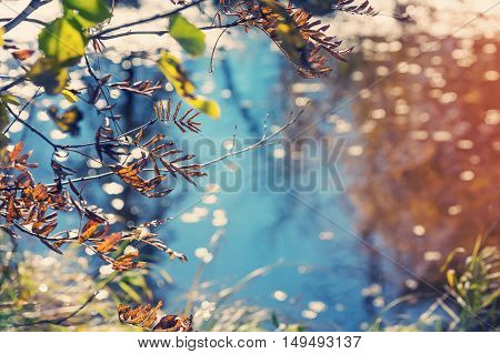 Autumn background with old leaves. Branches of trees on the bank of the pond.
