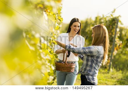 Two Women In Vineyard