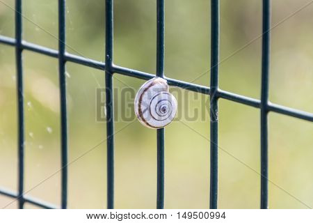 Small Snail Clinging To The Network