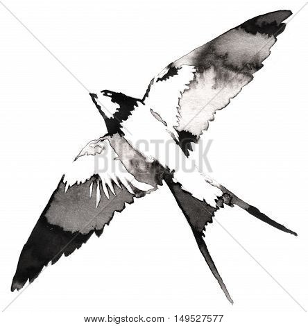 black and white painting with water and ink draw swallow bird illustration