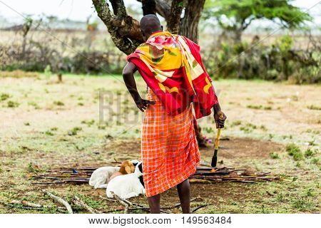 Massai farmer checking on his goats