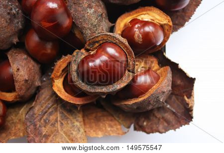 Ripe horse chestnuts and dry leaves on white background