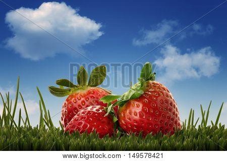 closeup of three strawberries set over green grass