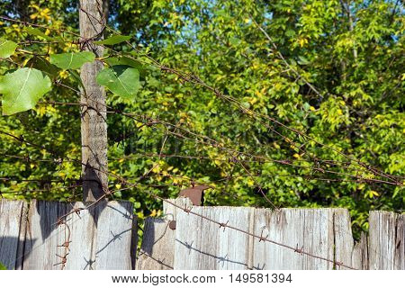 Barbed wire sticking out of the wooden fence. Metal is old and rusty. In the background green leaves of the trees.