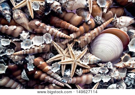 Marine style background from shells and starfish closup