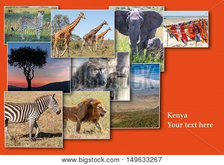 Collage from images of wildlife and beautiful sunset in the Kenya Africa. Africa wildlife and nature concept.