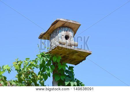 Birdhouses, Houses For Birds