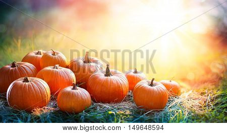 Pumpkins In The Field At Sunset - Thanksgiving And Fall Background