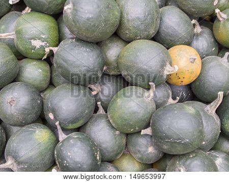 Harvest: Heap of Gem Squash African Smaragd Cucurbita pepo