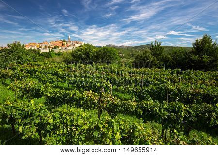 Old Village With Vineyard, Blue Sky And Mountains In Labin, Istria, Croatia