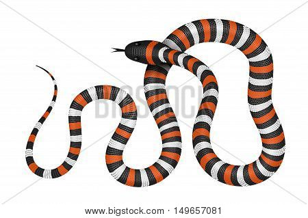 Coral snake vector illustration isolated on white. Tropical serpent EPS image