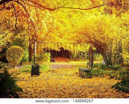 Sunshine in Fall park path with vibrant yelow fallen leaves and tree, retro toned
