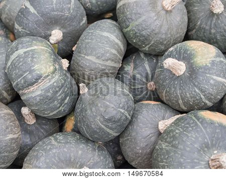 Harvest: Heap of Japanese Green Hokkaido Cucurbita maxima