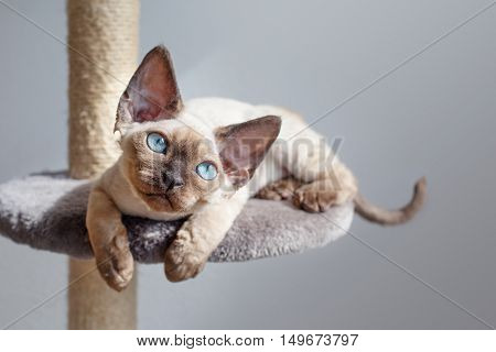 Beautiful kitten with blue eyes is sitting on the scratching post and enjoying the warmth of sunlight. Cat is sitting near the window. Pet Equipment, Accessories and supplies. Copy-space for your advertisement text