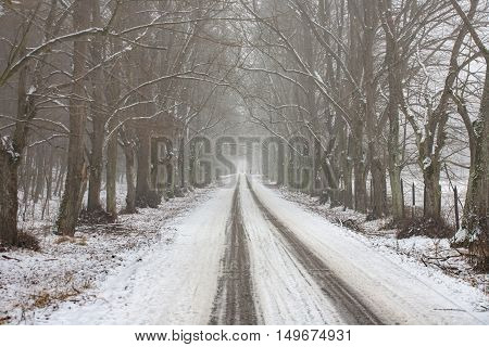Snowy way running through a foggy forest