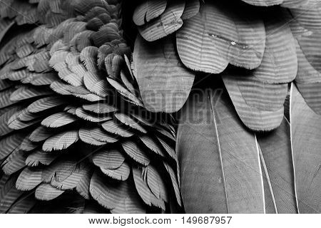 Background Pattern Of Black Feathers.