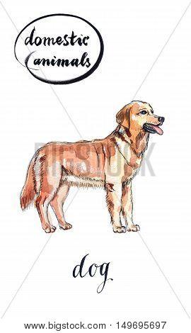 Pretty brown dog hand drawn - watercolor Illustration