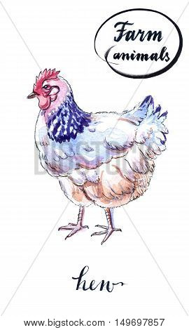 A hen is a laying hen of white color. With a comb. Hand drawn - watercolor Illustration