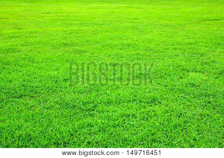 Green lawn with short grass for background
