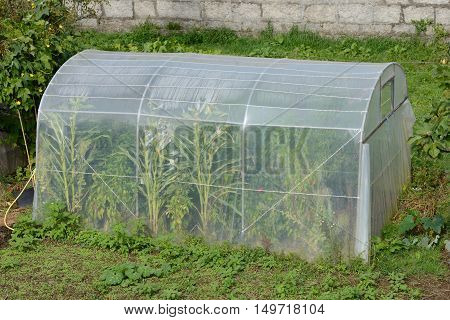 image of hothouse of cellophane tape on the garden